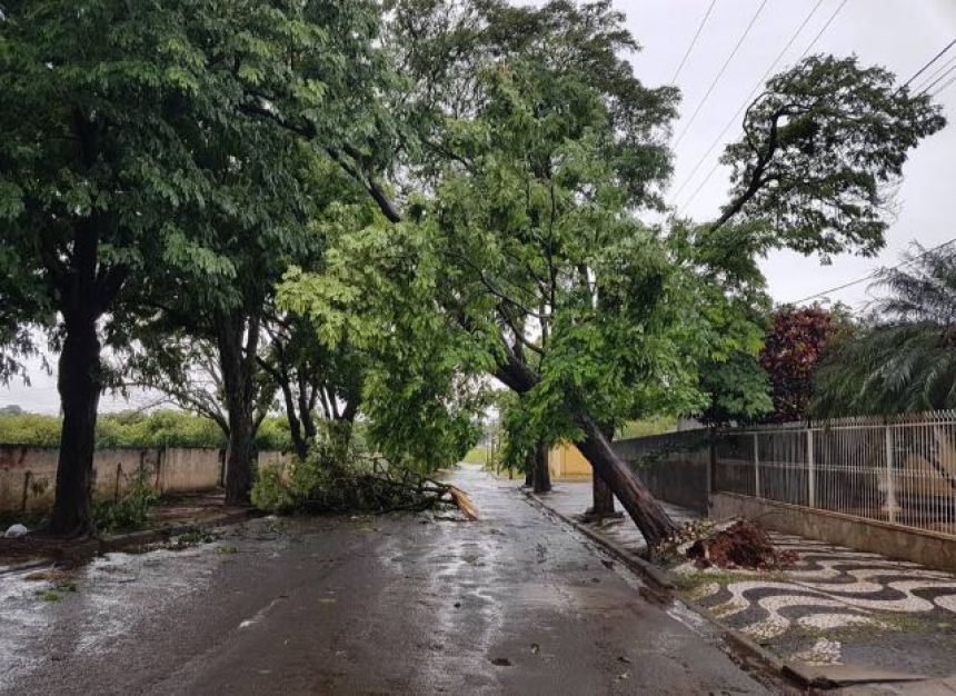 Estragos das chuvas geraram quase 500 pedidos de limpeza