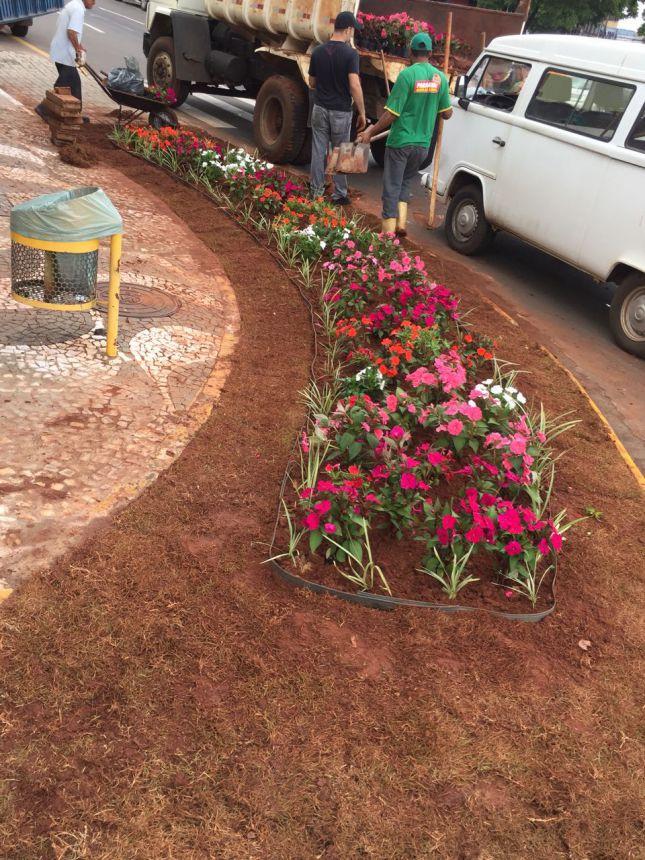 Meio Ambiente planta flores em canteiros de ruas
