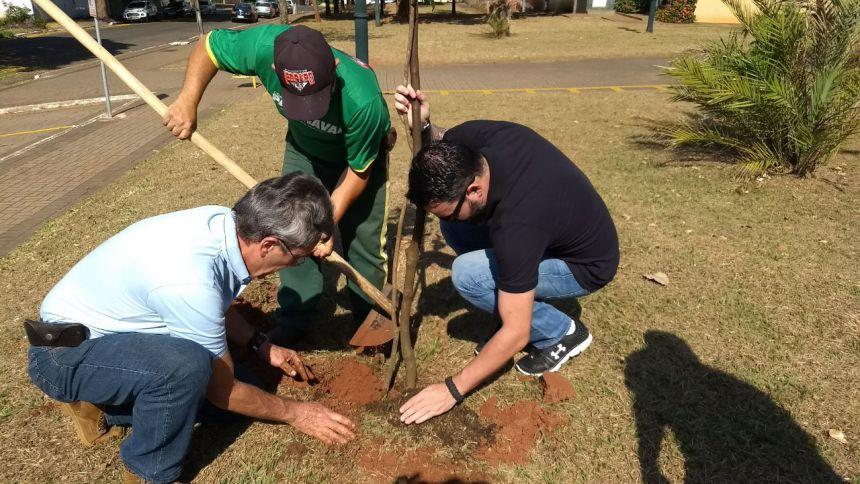 Código de Arborização determina replantio de cada árvore cortada no município